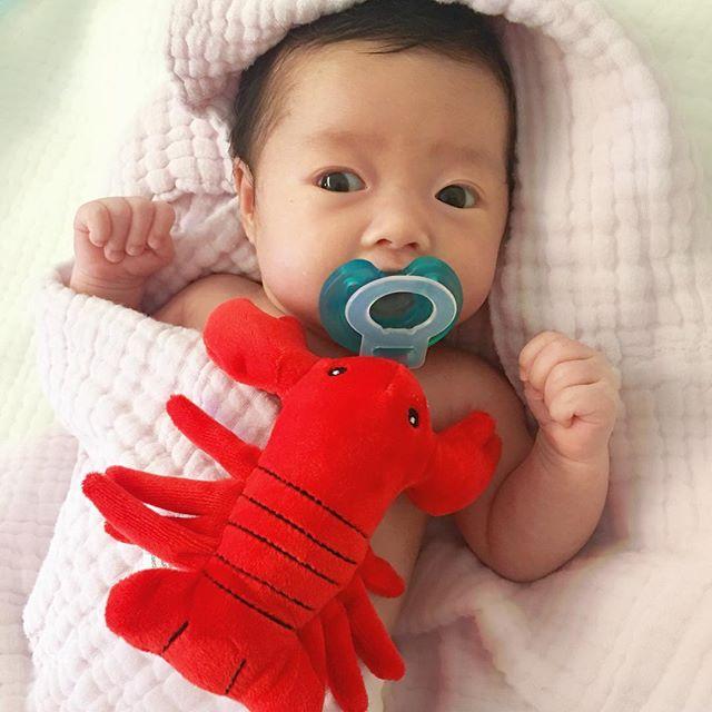 nookums_lobster